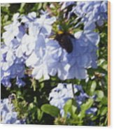 Bee And Flowers Iv Wood Print