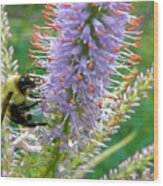 Bee And Its Lavender Delight Wood Print