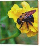 Bee And Marigold Wood Print