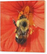 Bee And Nasturtium Wood Print