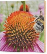 Bee And Pink Flower Wood Print