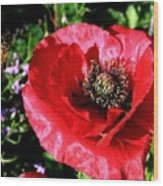 Bee And Red Poppy Wood Print