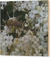 Bee And Small White Blossoms 2 Wood Print