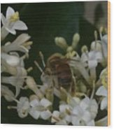 Bee And Small White Blossoms Wood Print