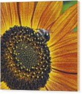Bee And Sunflower. Wood Print