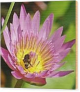 Bee And The Lily Wood Print