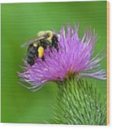 Bee And Thistle Wood Print