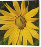 Bee And Yellow Flower Wood Print