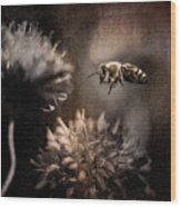 Bee Approaching Red Clover Blossom Wood Print