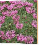 Bee Balm Beauties Wood Print