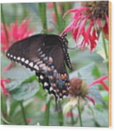 Bee Balm Butterfly Wood Print