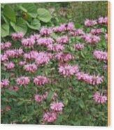 Bee Balm Garden Wood Print