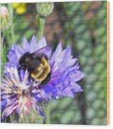 Bee Bee Wood Print
