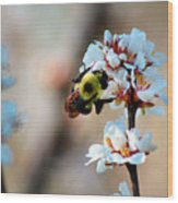 Bee Blossom Wood Print