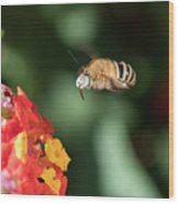 Bee, Bumblebee, Flying To A Flower, In Marseille, France Wood Print