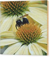 Bee Buzzer Wood Print