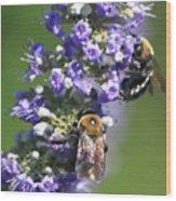 Bee Cause Wood Print