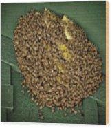 Bee Cluster Wood Print