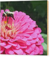 Bee Collecting Pollen Wood Print