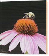 Bee Coneflower Wood Print