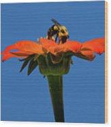 Bee Dreamsicle Wood Print