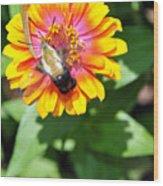 Bee Easy Wood Print
