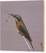 Bee Eater And Dragonfly Wood Print