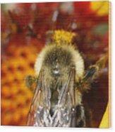 Bee Five - Wood Print