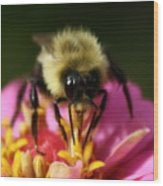 Bee Good Wood Print