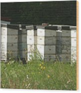 Bee Hives In A Farmer's Field Wood Print