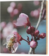 Bee In A Blossom Wood Print