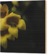 Bee In A Trumpet Wood Print