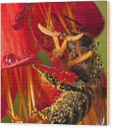 Bee In Flower Wood Print
