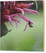 Bee In Kauai Wood Print