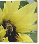Bee In Sunflower Wood Print