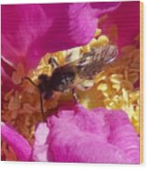 Bee In The Rugosa Wood Print