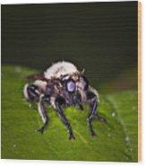 Bee Killer Fly Wood Print