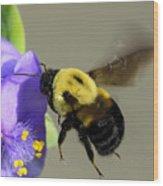 Bee Landing On Spiderwort Flower Wood Print