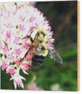 Bee-line 2 Wood Print