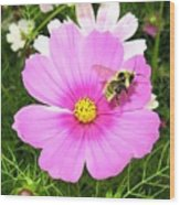 Bee-line 6 Wood Print