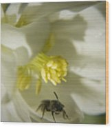 Bee Mine Wood Print