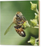 Bee On A Flower Closeup Wood Print