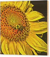 Bee On A Sunflower Wood Print