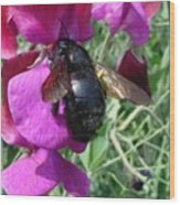 Bee On A Sweetpea 2 Wood Print