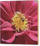 Bee On Beautiful Dahlia Wood Print