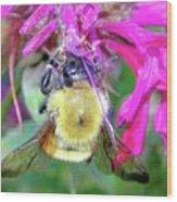 Bee On Bee Balm Wood Print