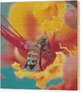 Bee On Bird Of Paradise 100 Wood Print by Diane Backs-Mancuso