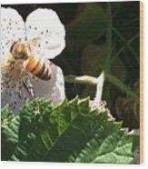Bee On Blackberry Blossom Wood Print