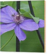 Bee On Bloom Wood Print