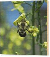 Bee On Broccoli Flower Wood Print